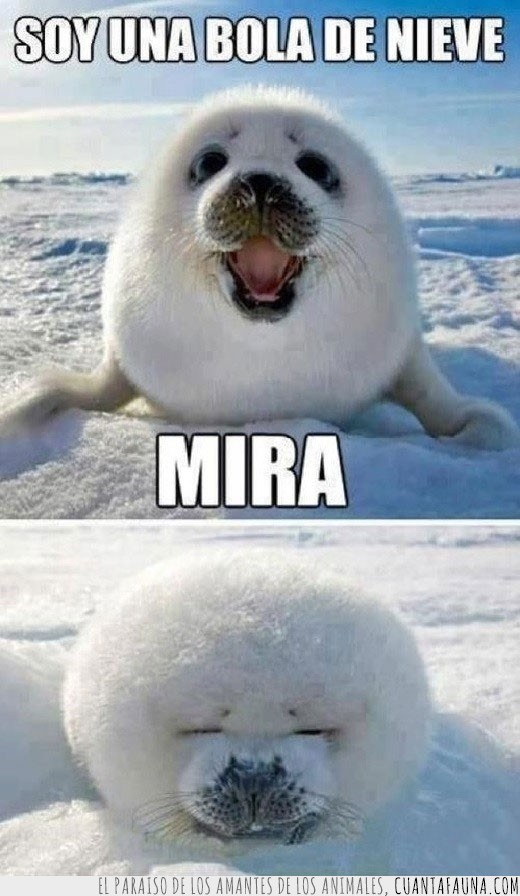 bola de nieve,cachorro,camuflaje,foca