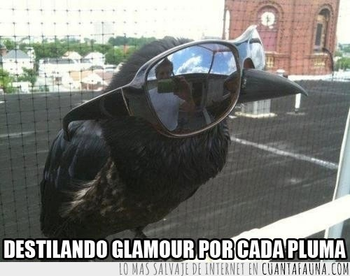 clase,cuervo,deal with it,estilo,gafas de sol,glamour,plumas