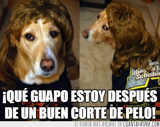 corte de pelo,despues,guapo,peluca,peluqueria,perro,perro con melena