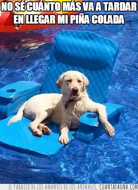 animales,bebida,millonario,perro,piña colada,piscina,sol,vacaciones,verano