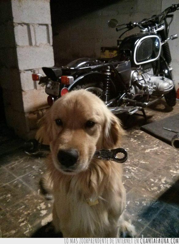 abandonado,addie,animal,bran,golden retriever,historia,perro,persona,tierna