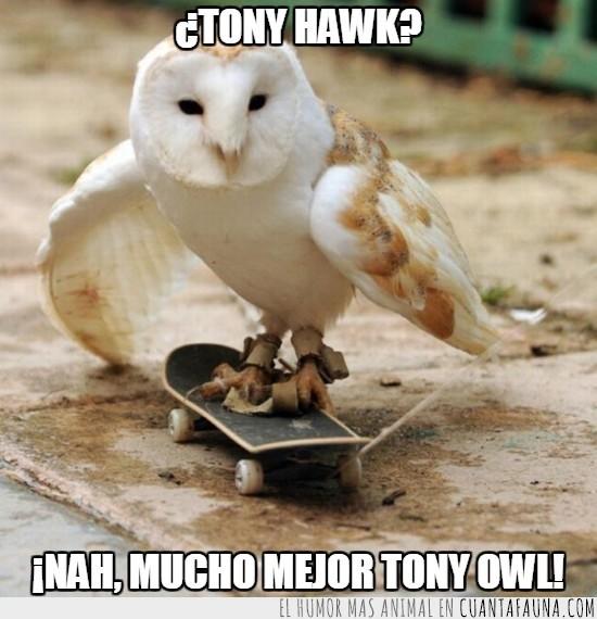 animal,crack,hawk es halcon en inglés,humano,lechuza,monopatín,owl es buho o lechuza,tiembla,tony hawk