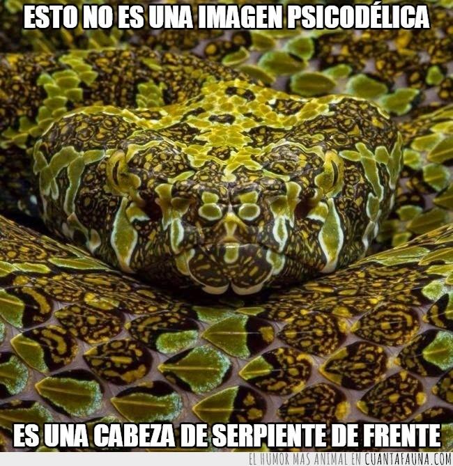 21697 - ¿Sabías que estás viendo una serpiente de más de 9 metros?