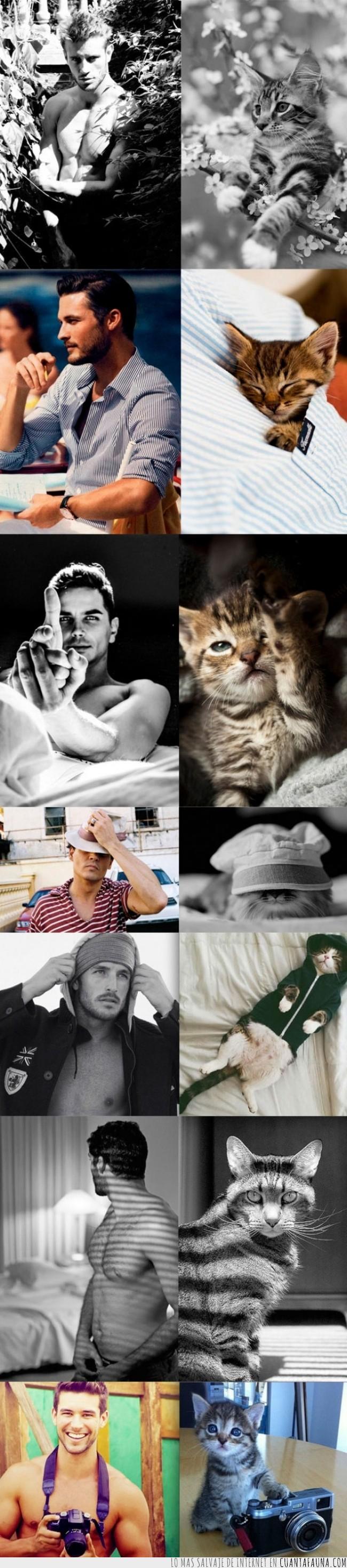 adoptar,belleza,chicos,fotogénicos,gatos,guapos,modelos