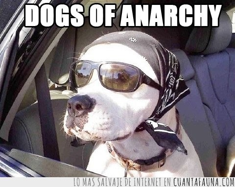 carretera,dogs,gafas,guau,perro,sons of anarchy,tío duro
