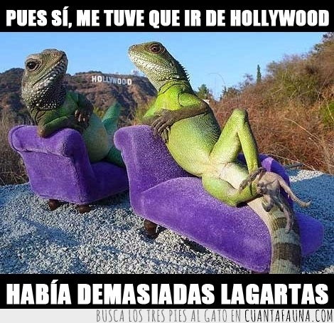 demasiadas lagartas,doctor,estres,hollywood,iguana,sofa
