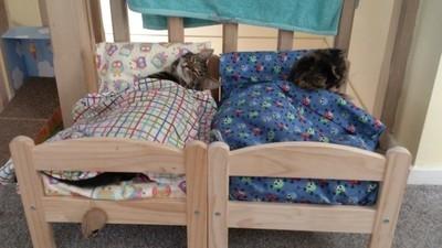21954 - Camas adorables de Ikea para gatos, lo último en Japón