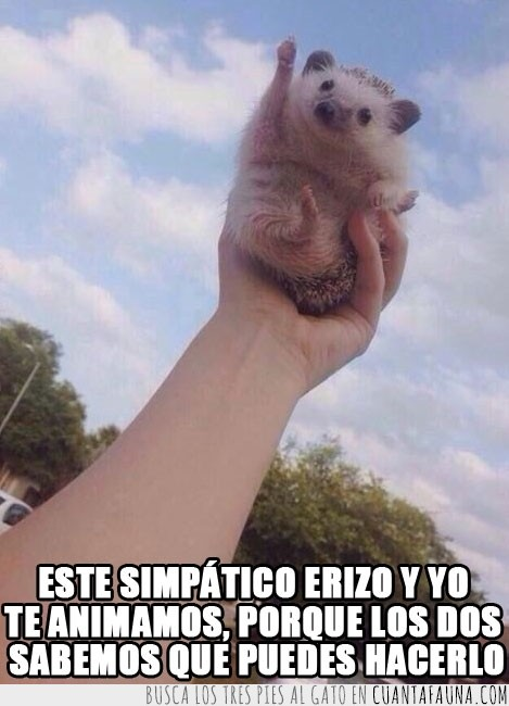 anima,animar,animo,erizo,patita levantada,tú puedes,yes we can