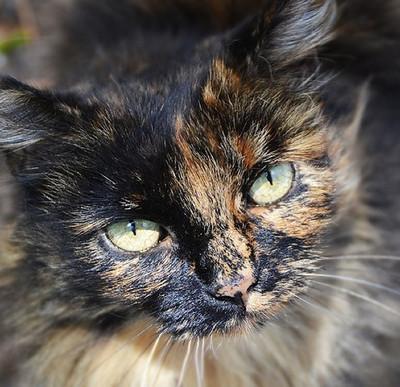 22056 - Éste instagramer sube fotos de los gatos perdidos de Disneyland
