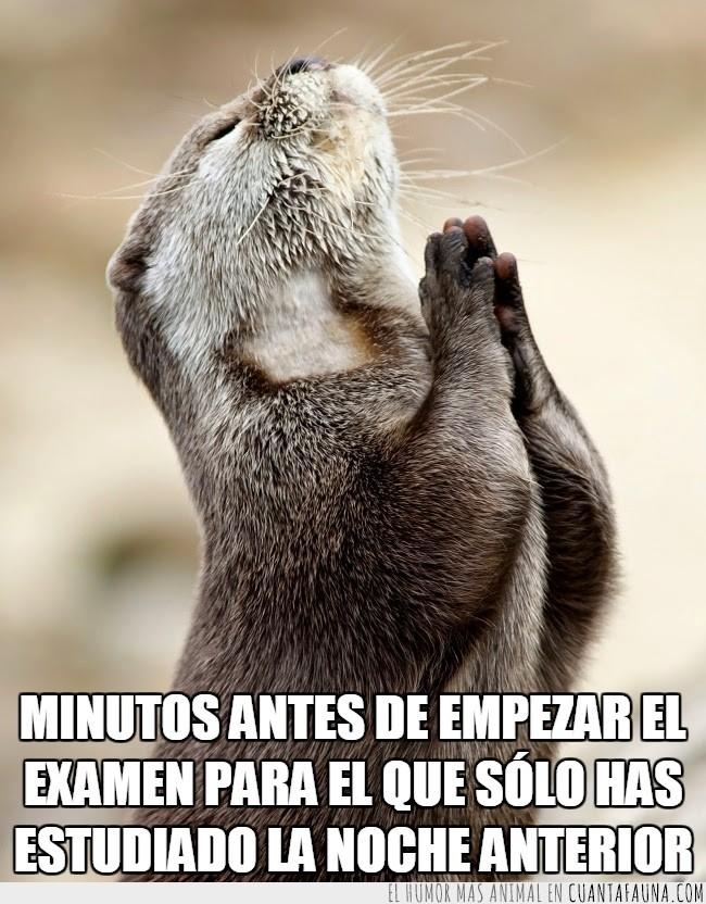 estudiar la noche antes,examen,notas,nutria,posición,rezar