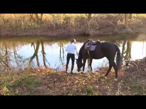 22097 - ¡Este caballo tiene la posibilidad de jugar con el agua por primera vez y descubre que le encanta!