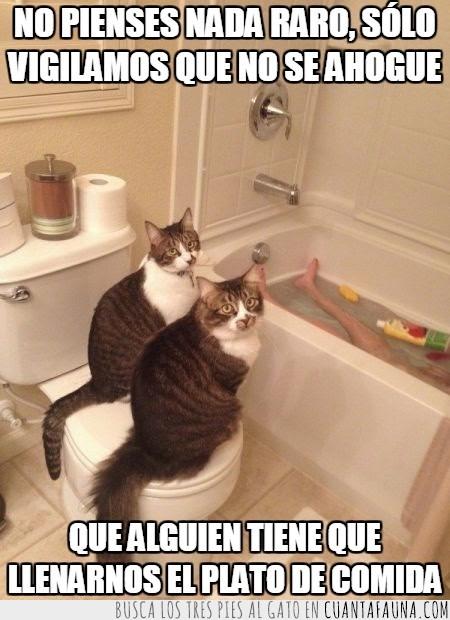 agua,ahogar,baño,gato,humano,interesados,vigilar