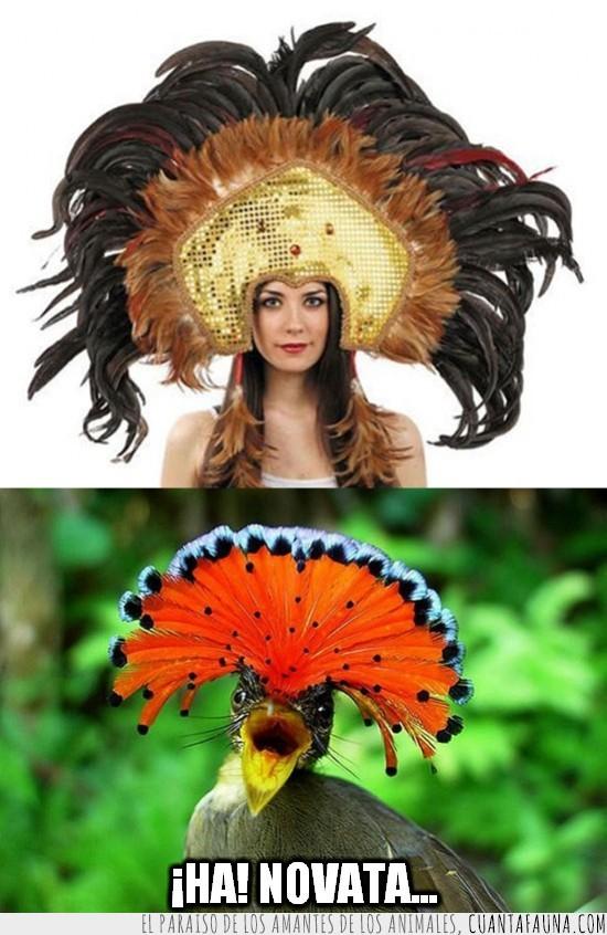ave,cabeza,pajaro,plumas,plumero,vedette