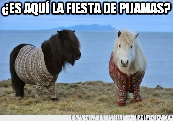 caballos,fiesta de pijamas,jersei,pijama,ponys,potros