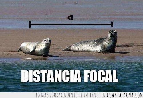 distancia focal,focal de foca no de foco,focas,fotografía,leones marinos