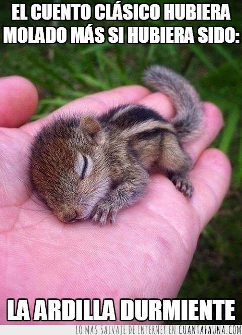 adorable,Ardilla,bonita,dormida,dormir,durmiente,molar,muero de amor