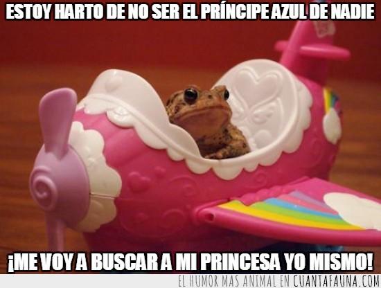 avion,buscar,de juguete,esperar,princesa,rana,rosa,sapo