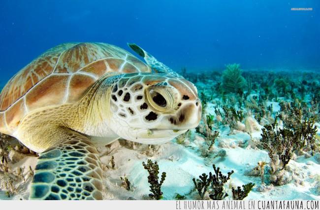 adorables,reptiles,sangre fría,Tortuga marina,tortuguitas