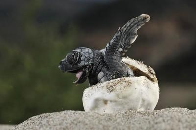 22499 - ¿Las tortugas reptiles de sangre fría? ¡Pero si son adorables!
