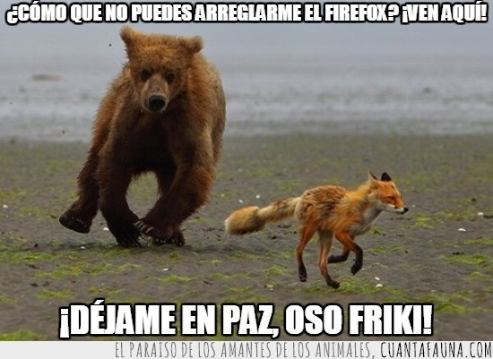 firefox,mascota,oso pardo,perseguir,zorro