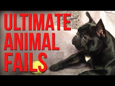 22592 - La torpeza de los animales puede ser adorablemente divertida