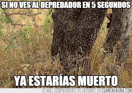 5 segundos,camuflaje,cazado,cazador,depredador,leopardo,muerto,ver