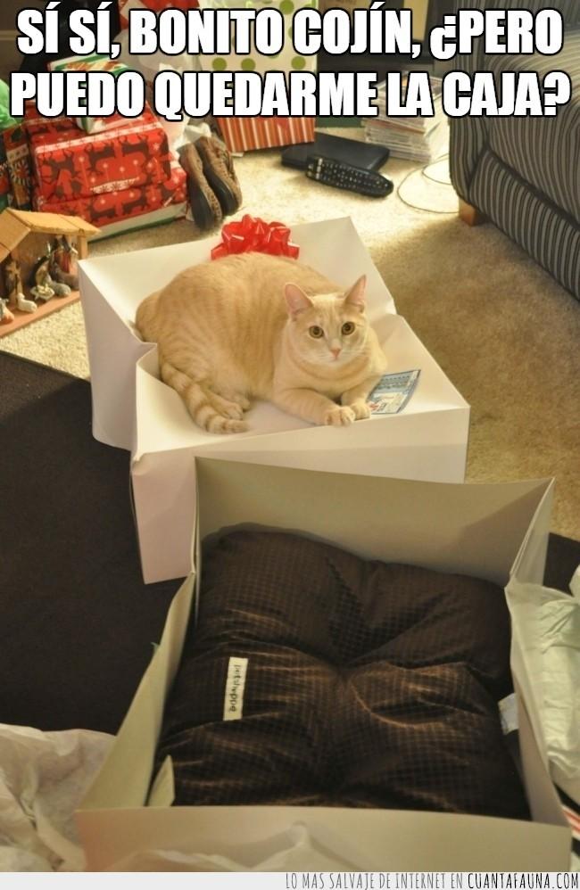 aplastar,Gato,navidad,paquete,regalo