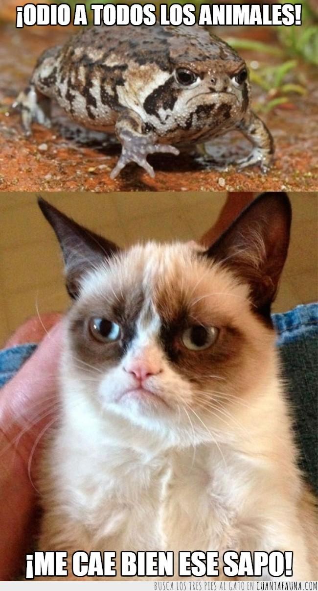 cara,enfadado,grumpy cat,grumpy frog,rana,sapo