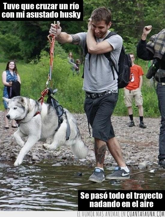 arnes,cable,dogg paddling,husky,nadar,no lo veia muy claro,perro,trayecto