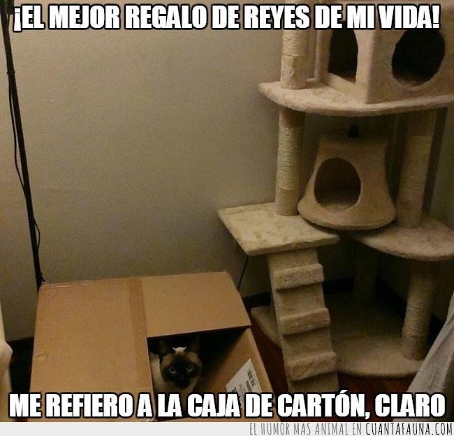 caja,castillo de gato,Gato,regalo,reyes