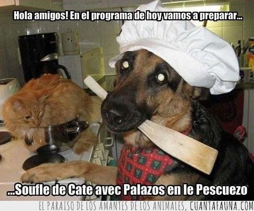 cocina,gato,palos,pescuezo,receta
