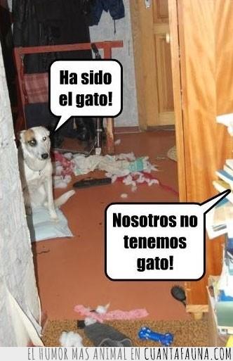 culpar,destrozo,echar la culpa,excusa,gato,no cuela,perro