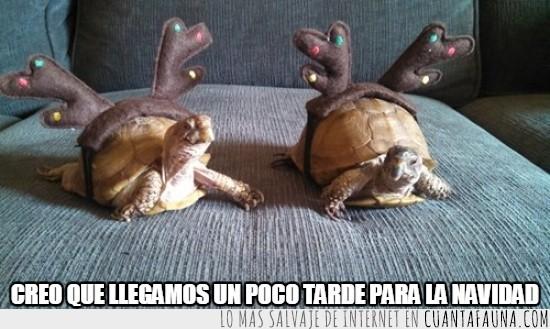 caparazón,cuernos de reno,llegar tarde,navidad,tortugas
