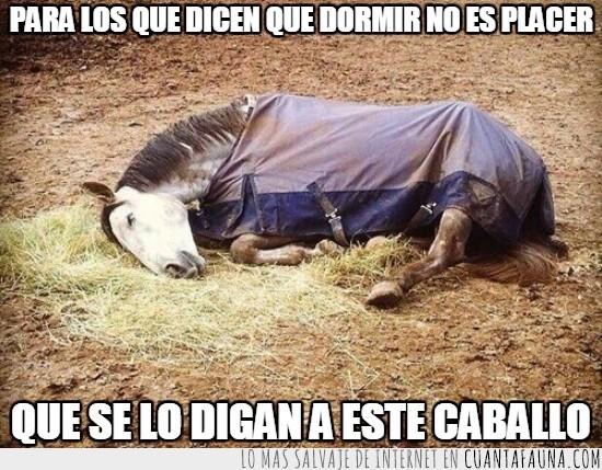 caballo,dormir,placer,sobado,tapado,tumbado