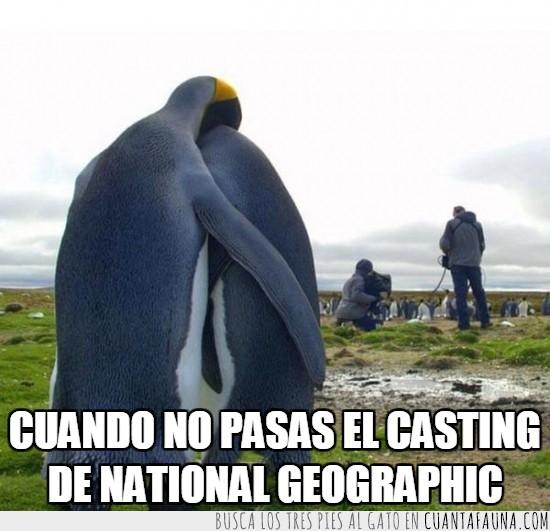 casting,detrás de las cámaras,grabación,grabar,pingüinos,rechazados,tristeza