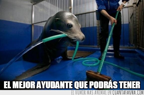 agua,ayudar,estadio Shinagawa del Aqua en Tokio,foca,limpiando,manguera