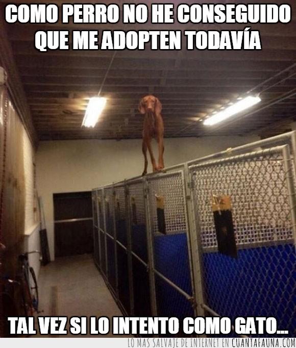 agilidad,Altura,encierro,encima,equilibrio,perrera,perro,reja,saltar,valla