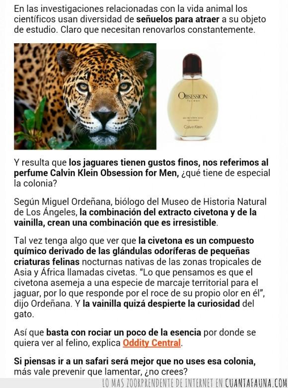 calvino klein,irresistible,jaguar,olor,perfume