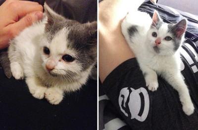23180 - Mascotas rescatadas y adoptadas, el antes y el después