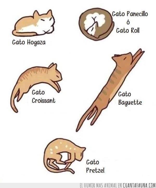 Dibujos De Gatos Tiernos