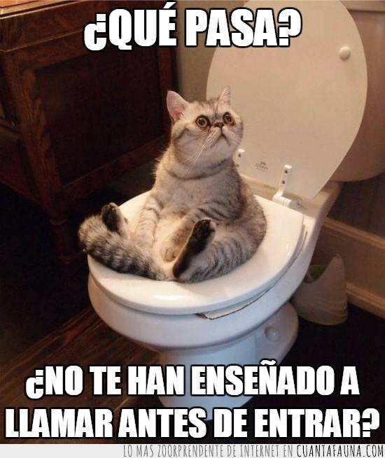 baño,gato,inodoro,intruso,necesidades,puerta,wc
