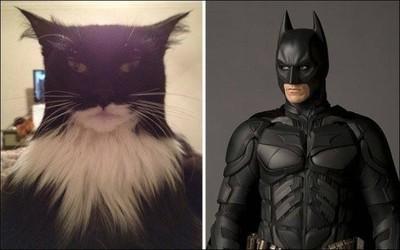 23237 - Gatos que se parecen a personajes famosos, ¿o será al revés?