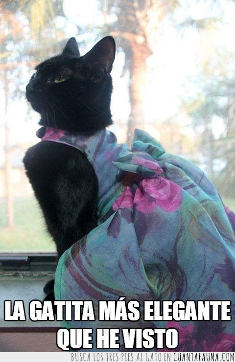 elegancia,elegante,gata,hermosa,negra,vestido