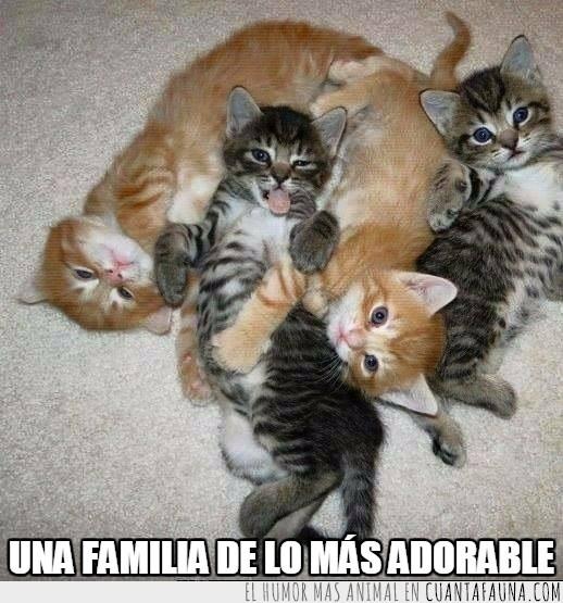 bebés,cachorros,familia,gatitos,posando