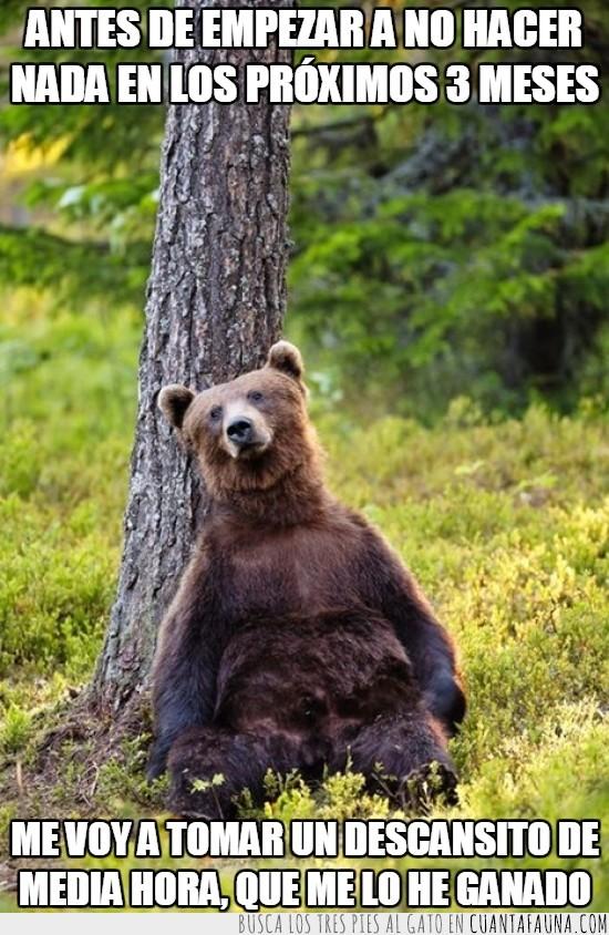 arbol,descansar,descansito,no hacer nada,oso pardo,tronco