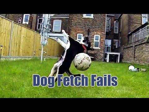 23281 - Perros que no son tan hábiles ni tienen tantos reflejos como cabría esperar