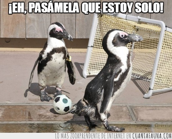 balón,futbol,ganar,gol,meter,pasar,pelota,pinguino
