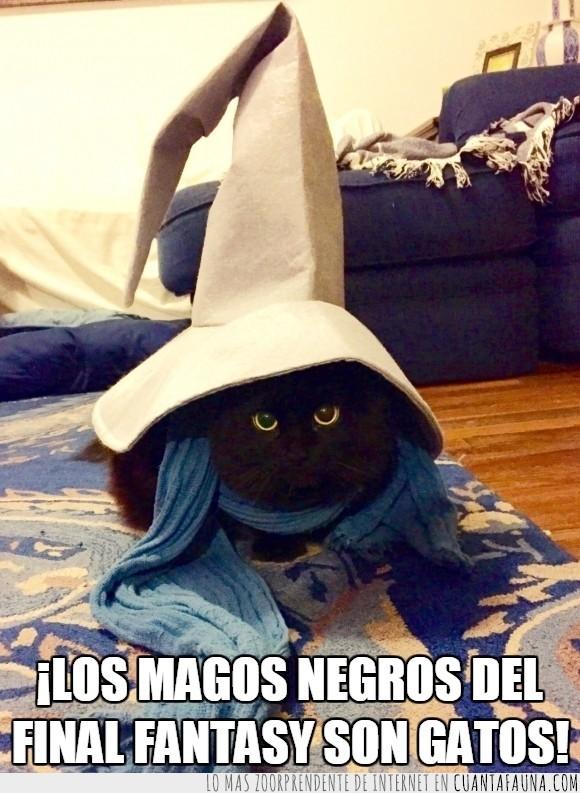 cosplay,fantasy,félido,felino,gato,mago,Mago Negro
