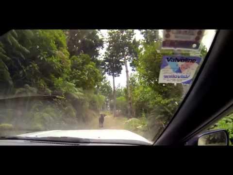 23317 - Cabras salvajes que no se lo piensan dos veces antes de liarse a cabezazos contra un coche