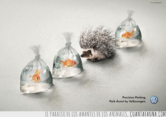 anuncio,bolsas de agua,campaña,erizo,peces,volskwagen